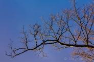 golden hour light on winter branches.