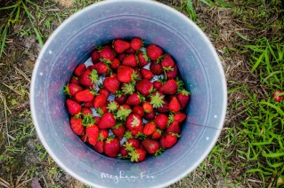 This made me wish I liked strawberries.