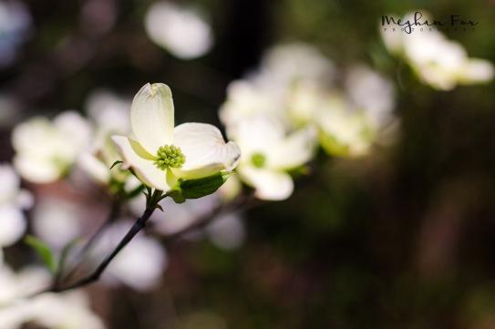 ©MeghanFox_forWEB-5923