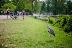 a bird in the Vondelpark